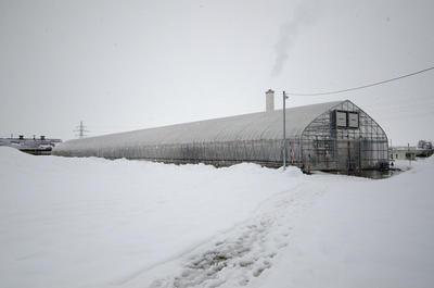 豪雪地域であっても可能な冬季の農作物生産