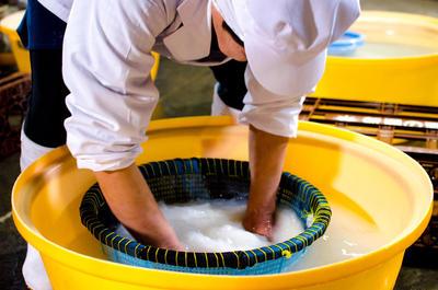 妙高山から滲み出る伏流水を使い丁寧に酒米を洗います